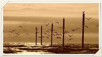 Möwen am Strand von Clemens Greiner