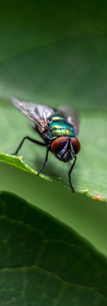 Fliege von Erwin Renken