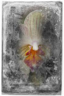 Shabby - Orchidee 3 von Erwin Renken
