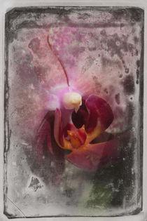 Shabby - Orchidee 2 von Erwin Renken