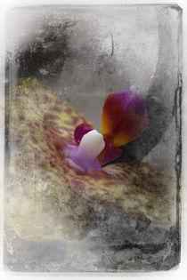 Shabby - Orchidee 1 von Erwin Renken