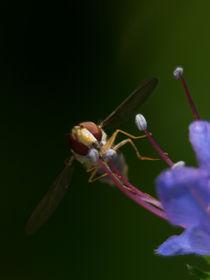 Fliege 4 von Erwin Renken