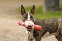Bully-Welpe mit Leuchtturm-Spielzeug von toeffelshop