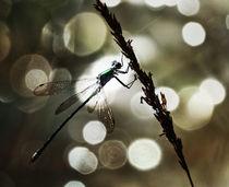 Libelle im feinen Bokeh von Clemens Greiner