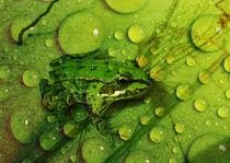 Der grüne Frosch von Clemens Greiner