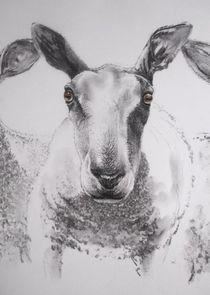 Mr.Sheep von terrydonnelly