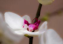 Orchidee von Erwin Renken