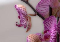 Orchidee 2 von Erwin Renken