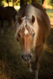 ... es steht ein pferd im wald von Manfred Hartmann