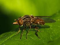 Fliege 3 von Erwin Renken