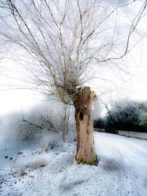 Winterweide von Erwin Renken