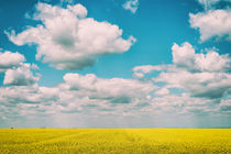 Yellow Rapeseed Flowers Field With Blue Sky by Radu Bercan