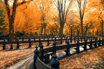 New York Central Park in autumn by Alexander Trattler