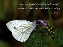 Schmetterling by Birgit Höhne