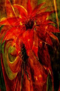 'Phönix - Kaktusblüte abstrakt' von Chris Berger