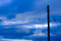 Blue Birds On The Wire by Ed The Frog