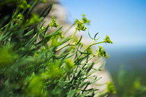 green bokeh view by Johan Dingemanse