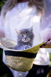 tragende Rolle der Katzenmutter ;) by Susi Stark