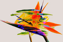 Bird of Paradise by Ladislav Dunaj