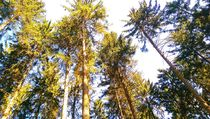 Wald Panorama by mia-f