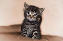 Kleine Katze / 7 von Heidi Bollich