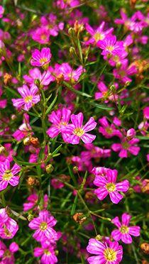 Kleine feine Blüten by mia-f