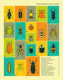 COMMON BEETLES OF NORTH AMERICA von Jazzberry  Blue