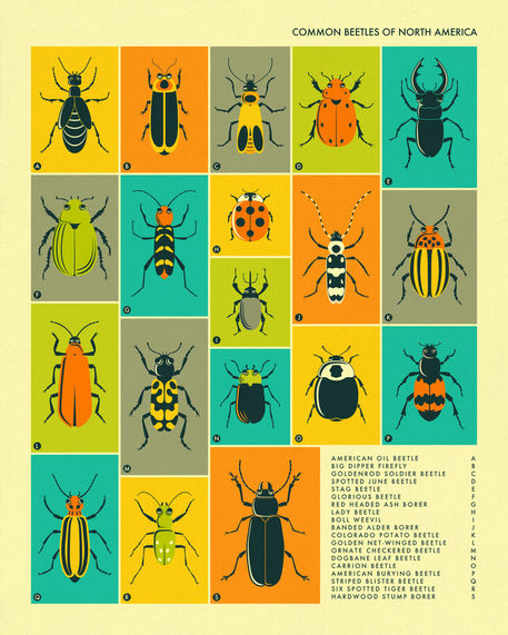 Beetles-2016-bigger-border
