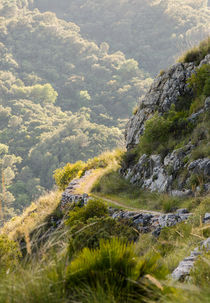 Mountain Landscape Hiking Path by Perry  van Munster