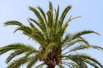 Green Palm Tree On Blue Sky by Radu Bercan