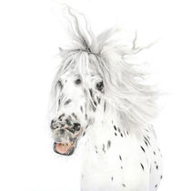 "Pony-Power ""Wildthing"" by cavallo-magazin"