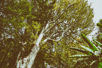 Green Tree Foliage In Summer by Radu Bercan
