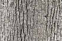 Tree Bark Background Texture by Radu Bercan