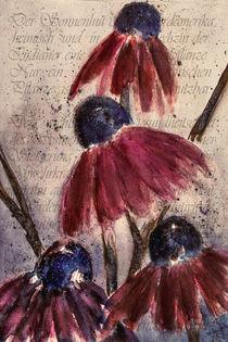 'Echinacea  - Roter Sonnenhut' von Chris Berger