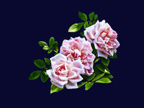 Three Pink Roses With Leaves von Susan Savad