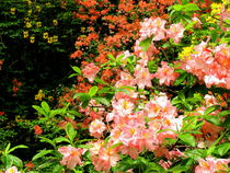Maiblüten von Ulrike Ilse Brück