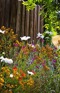Am Gartenzaun -- At the garden fence von Volker Röös
