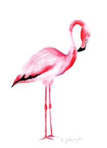 Flamingo 5 by Julia Reyelt