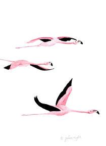Flamingo 7 von Julia Reyelt
