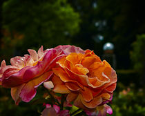 Rose Garden II by Volker Röös