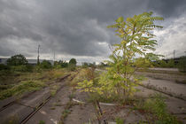 Bioreservat Güterbahnhof von Peter Jean Geschwill