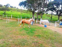 Cavalo Amigo by Ana Clara Lopes