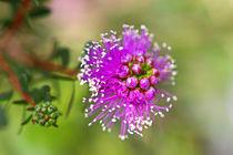 Sehr interessante Blüte by Bernhard Kaiser