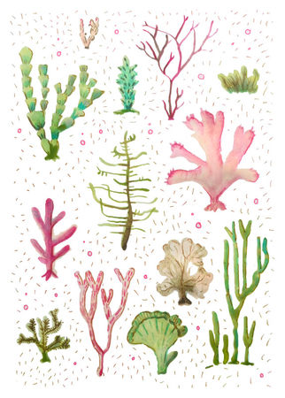 Cacti-of-the-sea