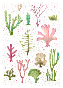 Cacti of the sea by Amy-Jean Hahndiek