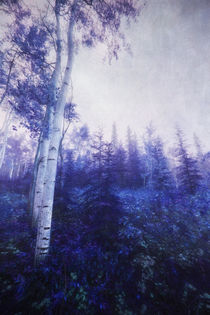 Wander in the foggy forest by Priska  Wettstein