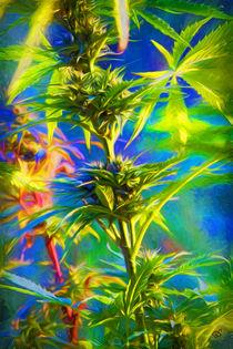 fleur du Paradis by Boris Selke