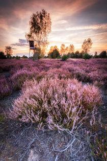 Heide by markusBUSCH FOTOGRAFIE