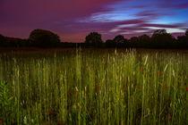 Mohnfeld in der blauen Stunde von Manuel Paul