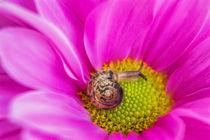 Small Snail von Michael Schubert